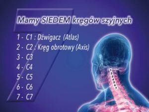 Mamy SIEDEM kręgów szyjnych