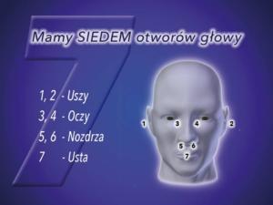 Mamy SIEDEM otworów głowy