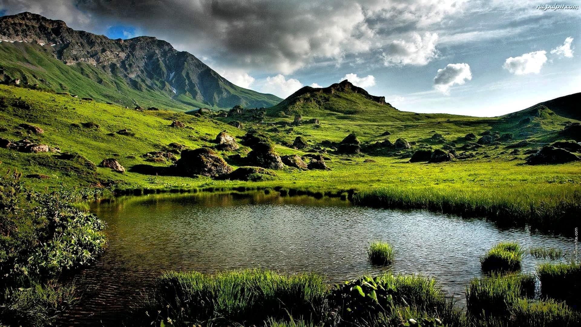 Pasze zielone i ciche wody...