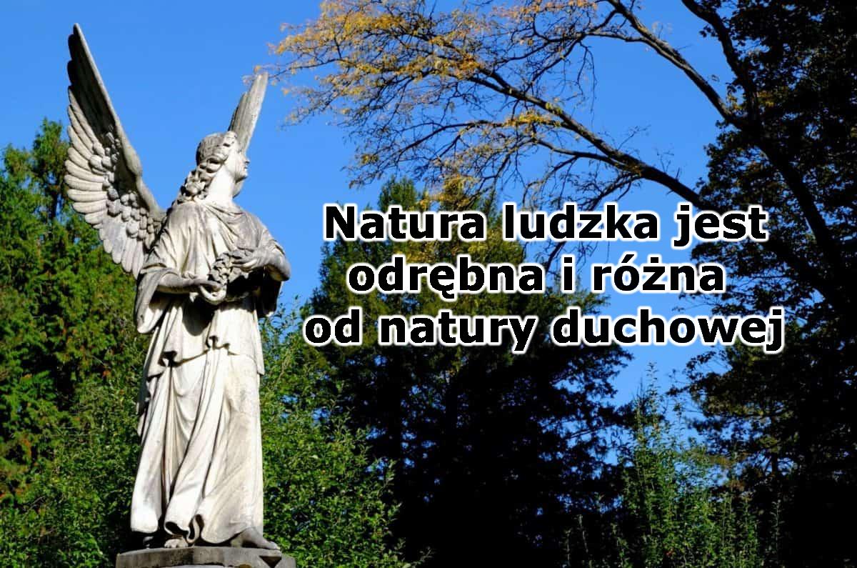 Na obrazku jest fragment jakiegoś krajobrazu - kilka drzew, niebo. Na pierwszym planie po lewej stronie stoi rzeźba anioła z rozłożonymi skrzydłami oraz z wzrokiem utkwionym w górze. Po prawej stronie jest napis - tytuł niniejszej serii.