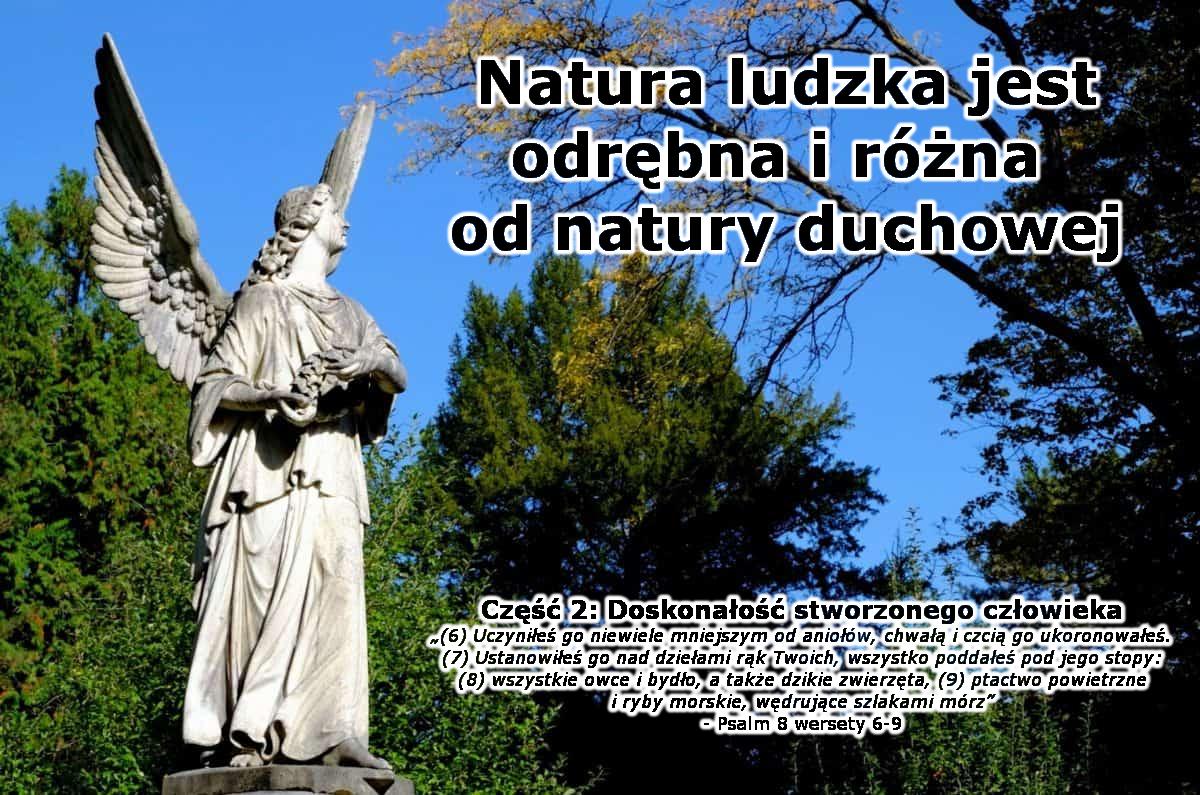 """Na obrazku jest fragment jakiegoś krajobrazu - kilka drzew, niebo. Na pierwszym planie po lewej stronie stoi rzeźba anioła z rozłożonymi skrzydłami oraz z wzrokiem utkwionym w górze. Po prawej stronie jest napis - tytuł odcinka, a pod spodem cytat z Psalmu 8 wersetów od 6 do 9: """"(6) Uczyniłeś go niewiele mniejszym od aniołów, chwałą i czcią go ukoronowałeś. (7) Ustanowiłeś go nad dziełami rąk Twoich, wszystko poddałeś pod jego stopy: (8) wszystkie owce i bydło, a także dzikie zwierzęta, (9) ptactwo powietrzne i ryby morskie, wędrujące szlakami mórz"""""""